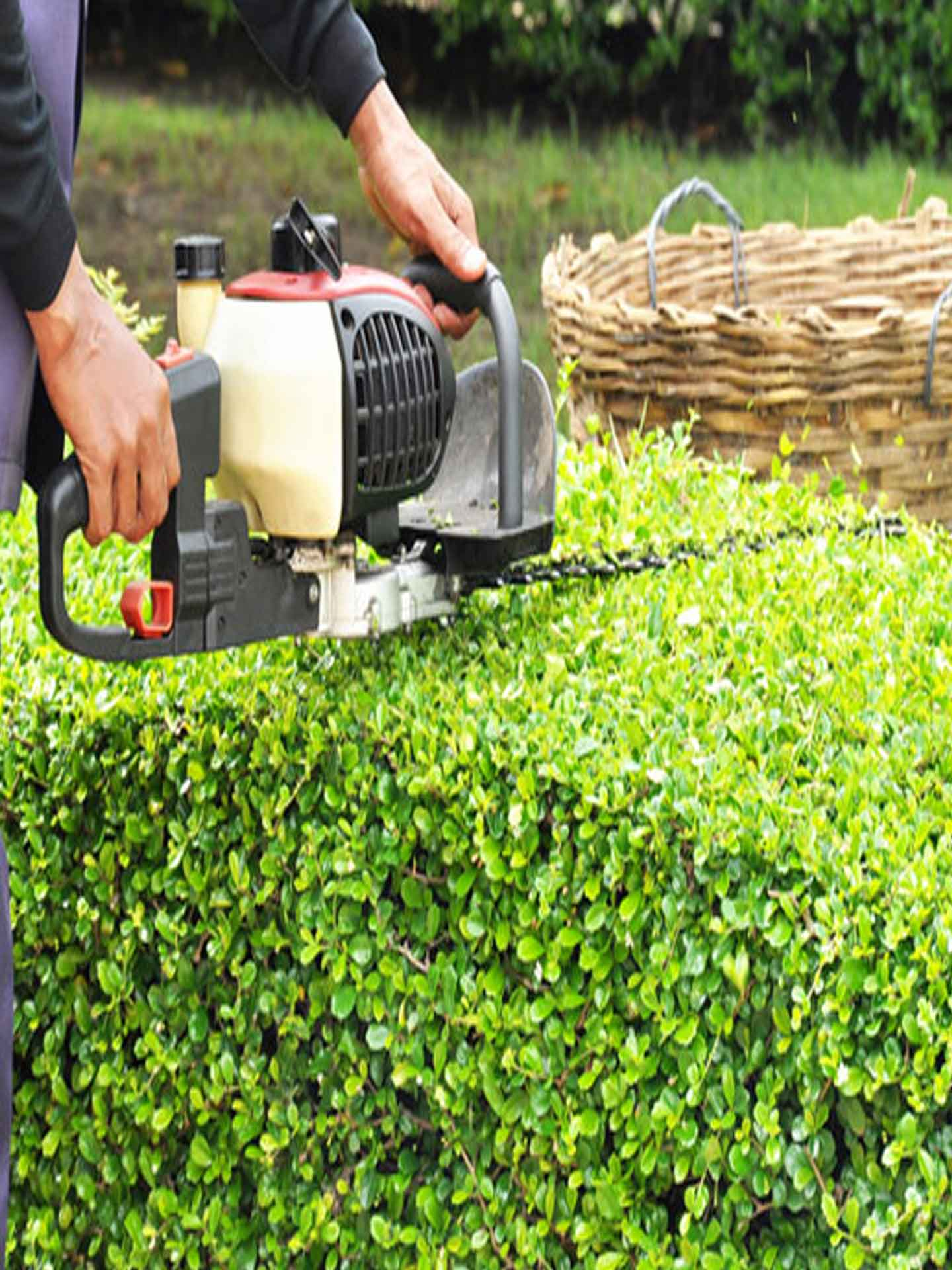 bush-trim